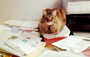 Cats love paperwork. But they're not very helpful with it!