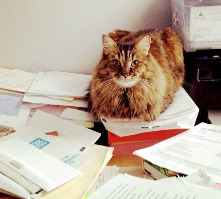 GDPR. Cats love paperwork. But they're not very helpful with it!