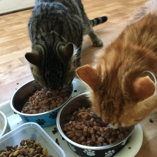 photo of two cats eating food
