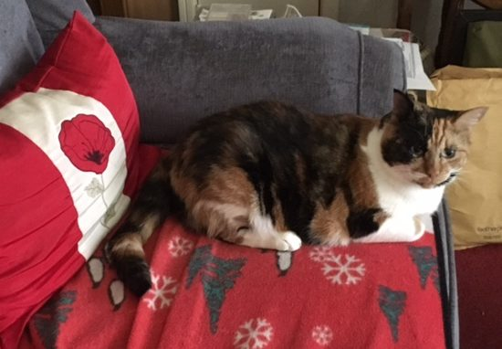 calico cat sleeping on sofa