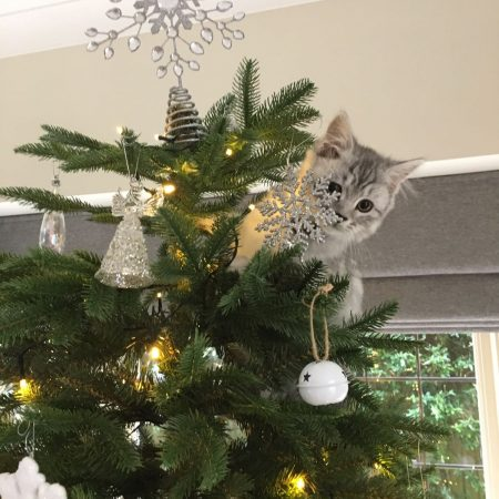 photo of cat in a Christmas tree