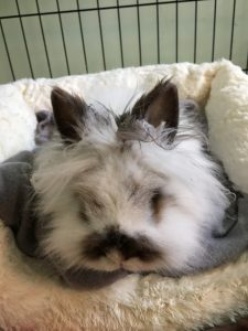 rabbit sitting in a comfy bed