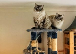 Two cats sitting on scratching platform