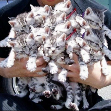 Lots of kittens